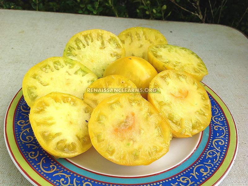 Anna Banana Russian Tomato Seeds