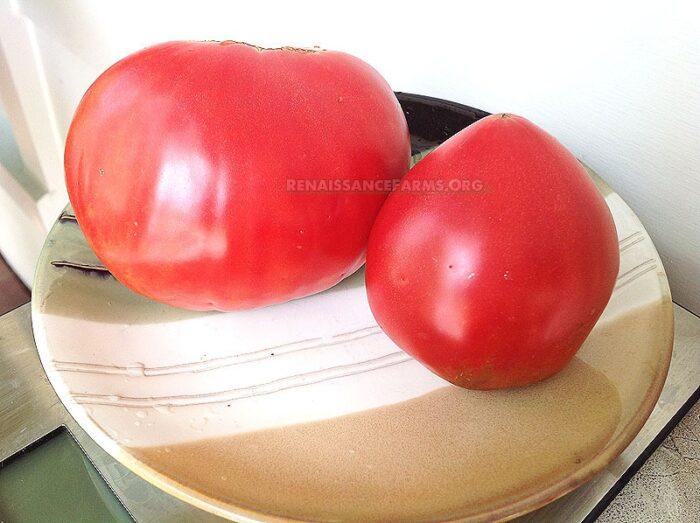 Anna Russian Tomato
