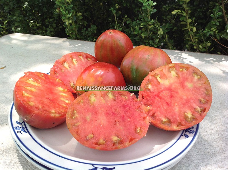 Anna_Russian_Tomatoes