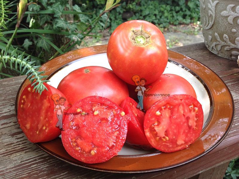 Argentina 1938 Tomato