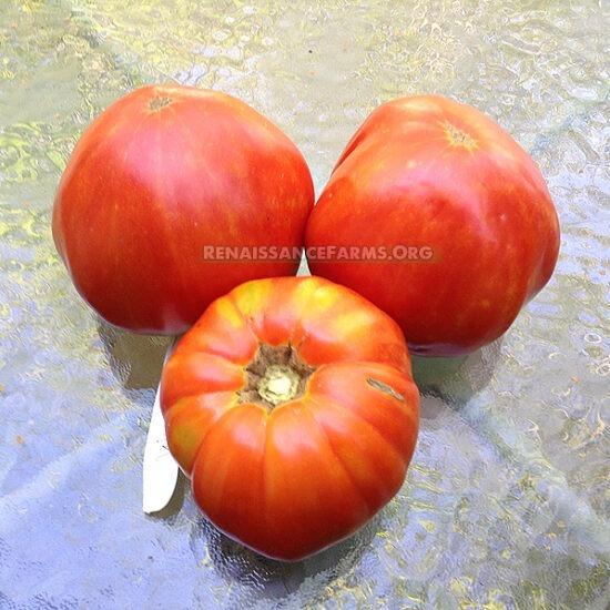 Ashleigh Tomato