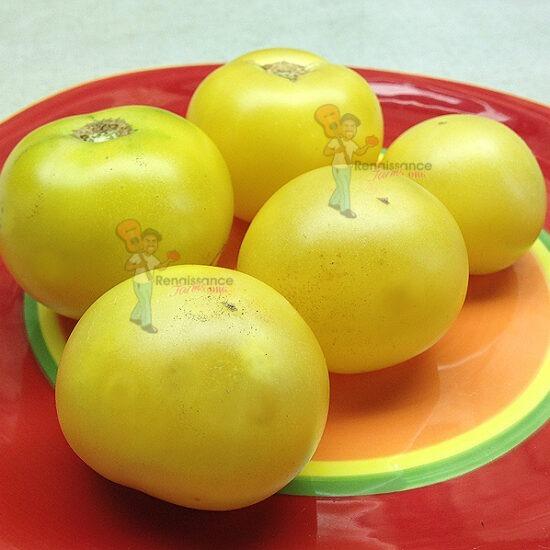 Barossa Fest Dwarf Tomato