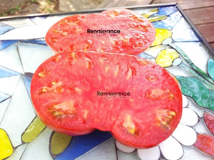 Beauty King Dwarf Tomato 2017