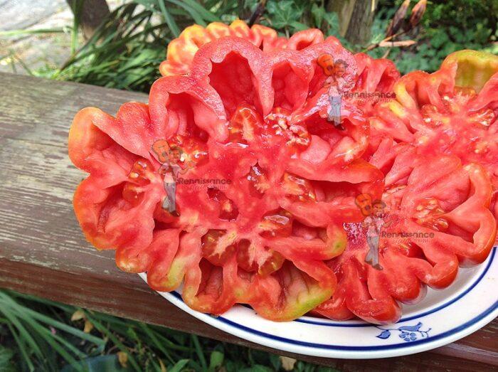 Beauty-Lottringa-Tomato
