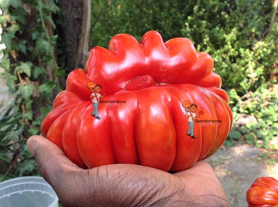 Beauty Lottringa Tomato Pictures
