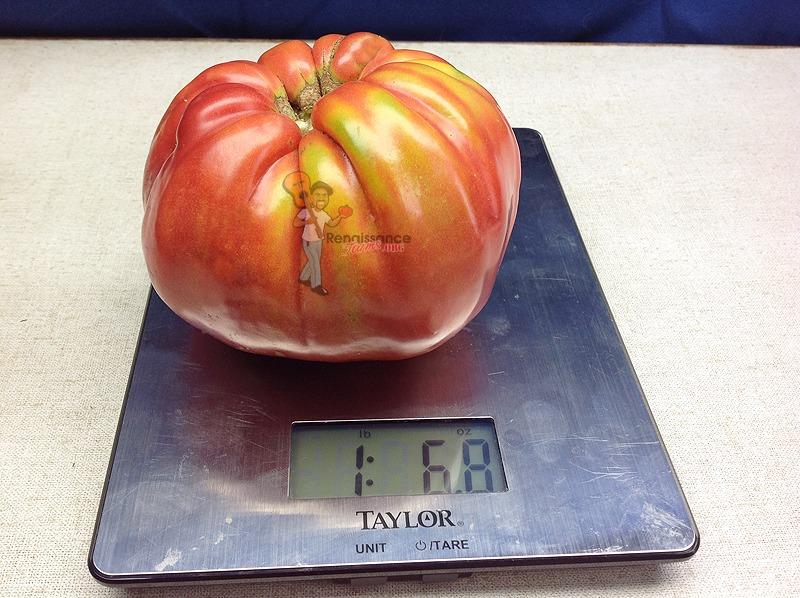 Behemoth-King-Tomato
