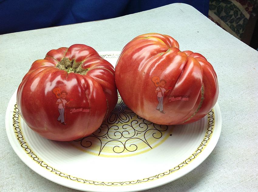 Behemoth King Tomatoes