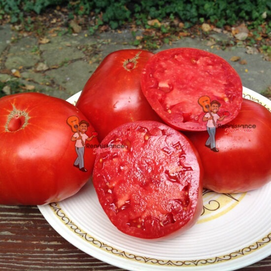 Belmonte Tomato