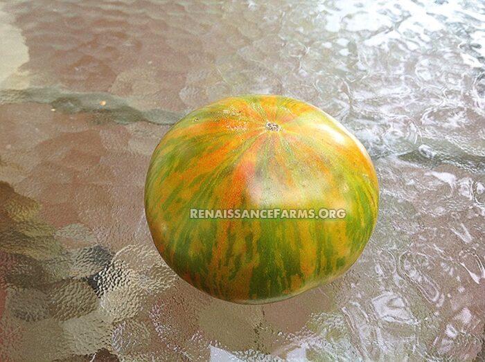 Berkley-Tie-Dye-Green-Tomato-2019