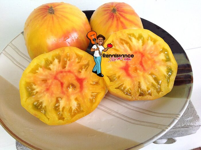 Big Rainbow Tomato Seeds