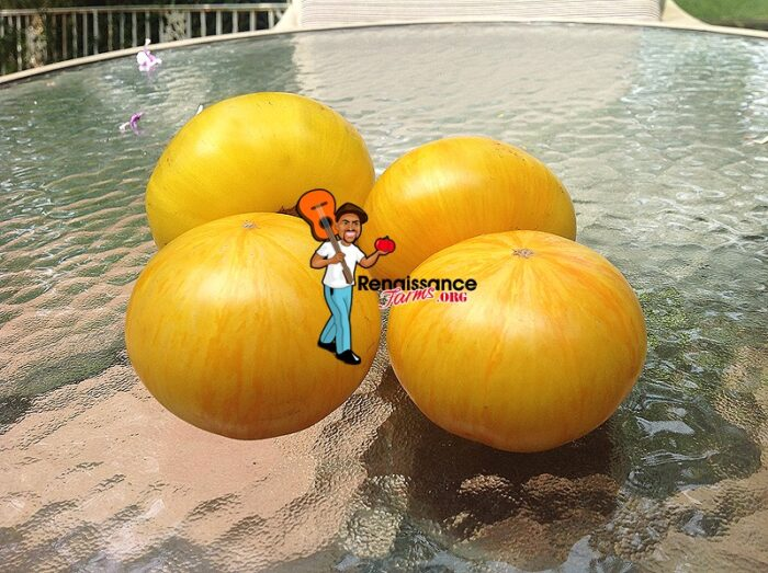 Big Yellow Zebra Tomato Seeds