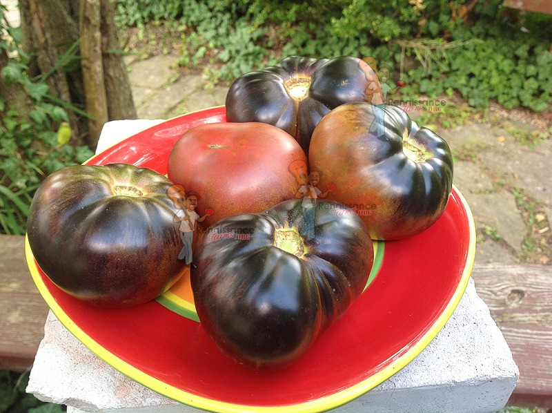 Black-Beauty-Tomato