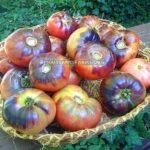 Blue Beauty Tomato In Basket