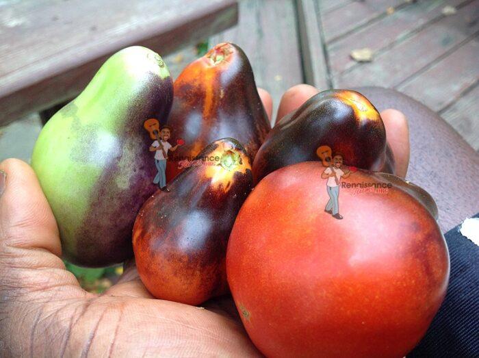 Blue Pear Tomato Information