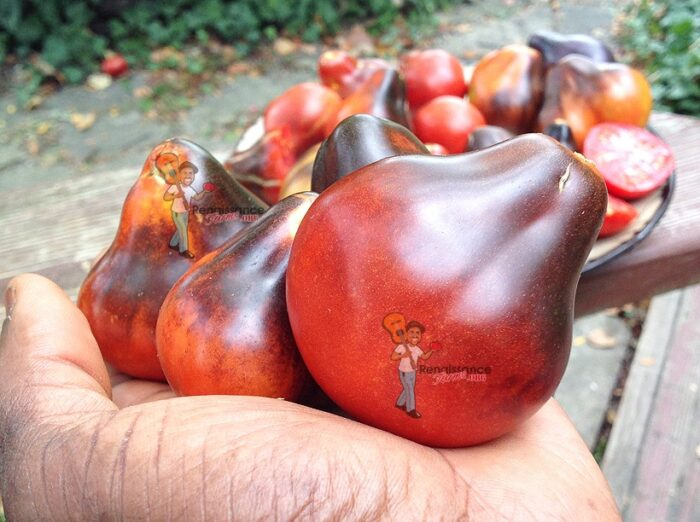 Blue Pear Tomato Seeds