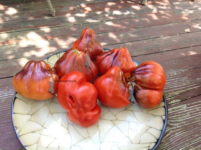 Blue_Pear_Tomato
