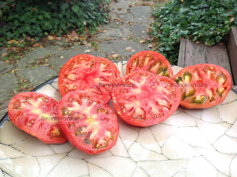 Boondocks-Tomato