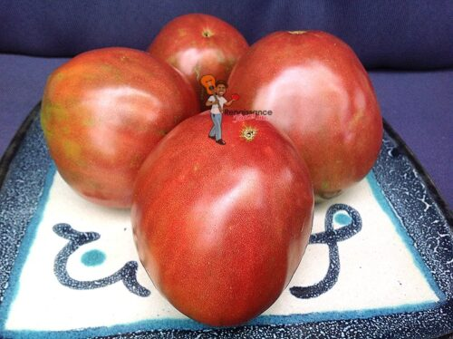 Brad's Black Heart Tomato