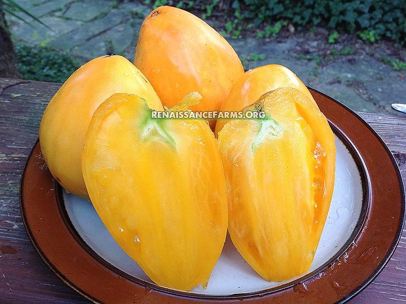 Bull's Heart Orange Tomato