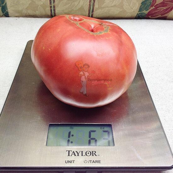 Caspian Pink Tomato
