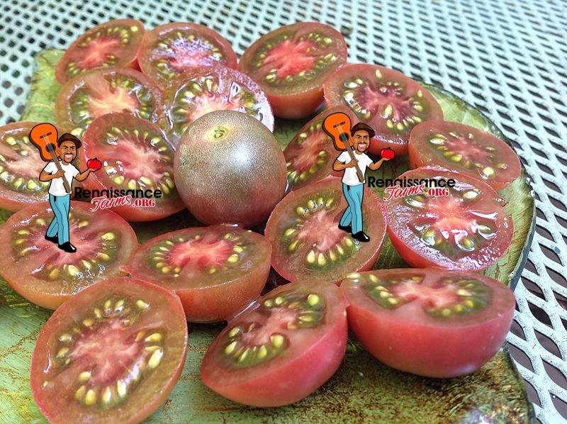 Chocolate Cherry Tomato 2019