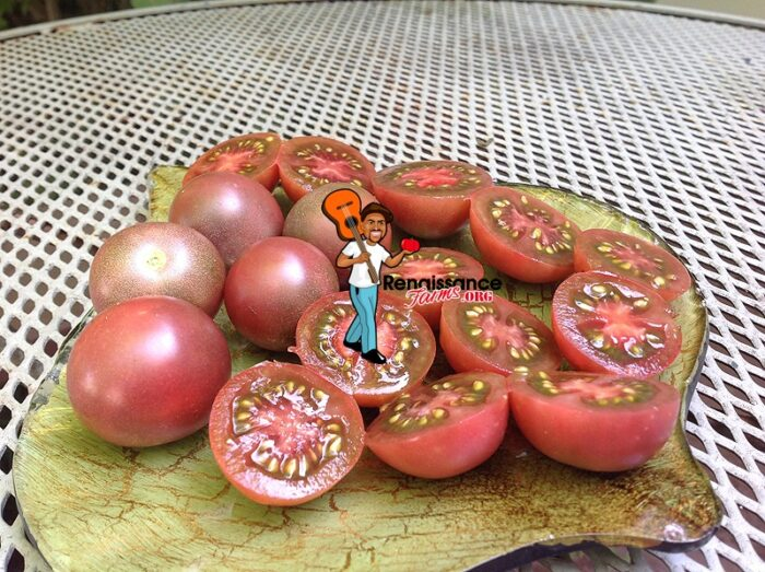 Chocolate-Cherry-Tomato