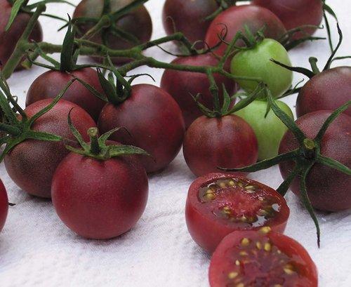 Chocolate-Cherry-Tomato-Picture