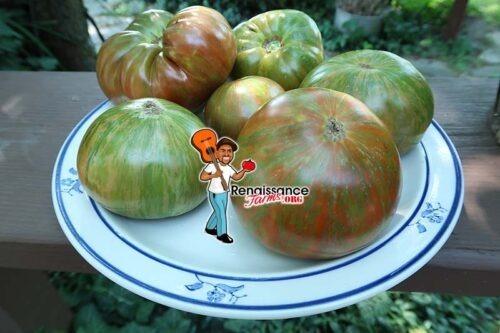 Chocolate Stripes Tomatoes