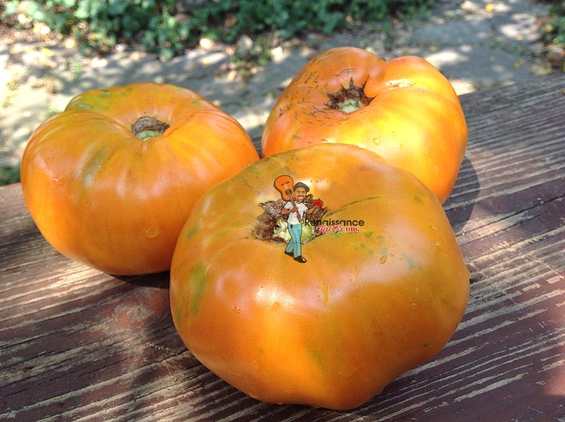 Claude Brown's Yellow Giant Tomatoes