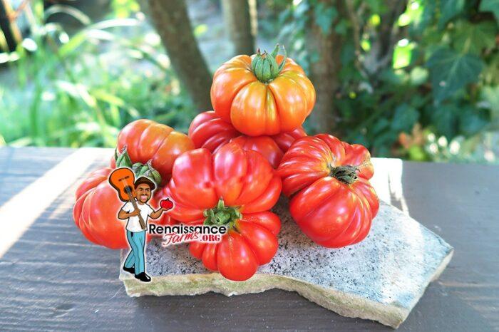 Costoluto Fiorentino Tomato