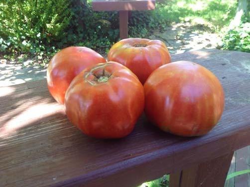 Cuostralee-Tomato-Beefsteak-Pictures