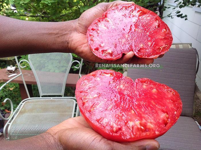 Delicious Hunt Strain Tomato