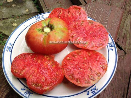 Dester Tomato