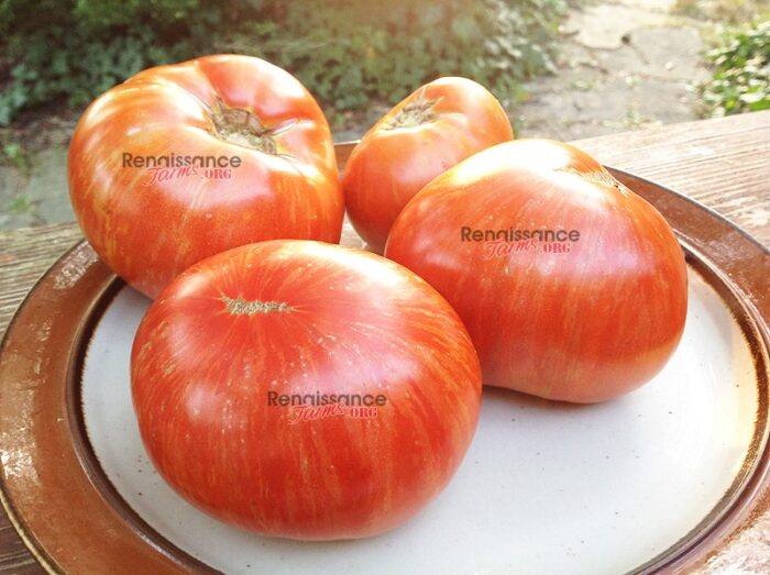 Dwarf Beauty King Tomato Seeds