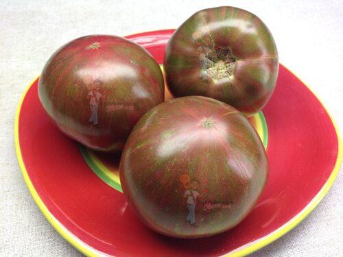 Dwarf Blackfire Tomato