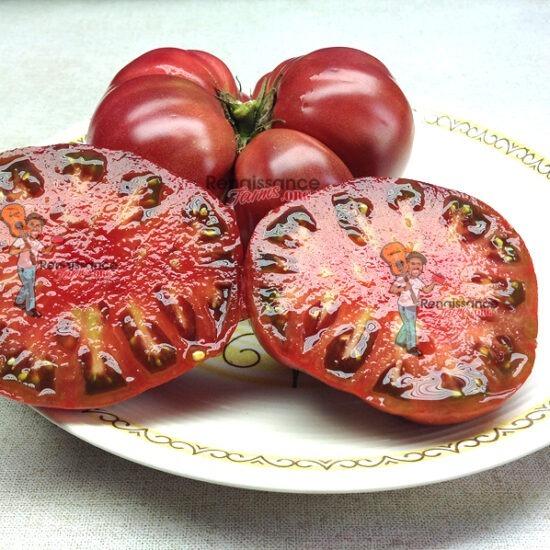 BrandyFred Dwarf Tomato