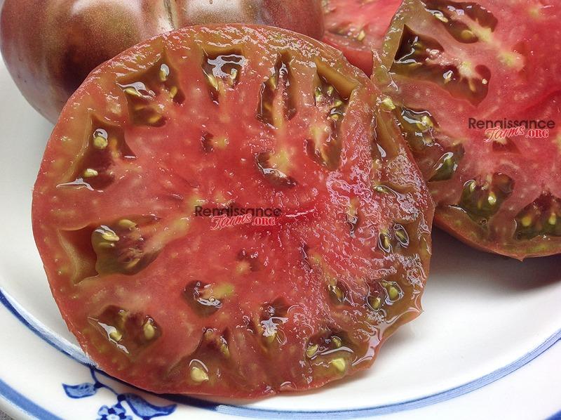 Dwarf BrandyFred Tomato Seeds