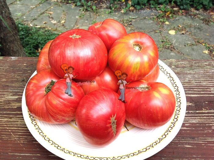 Dwarf Firebird Sweet Tomato Seeds