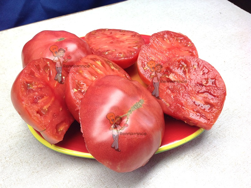 Rosella crimson Dwarf Tomato