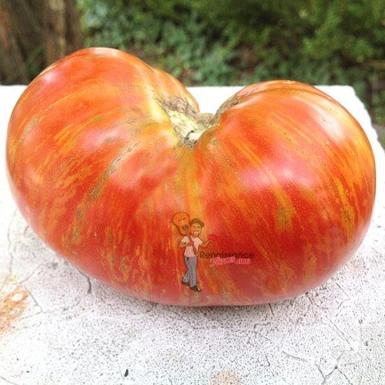 Dwarf Beauty King Tomato