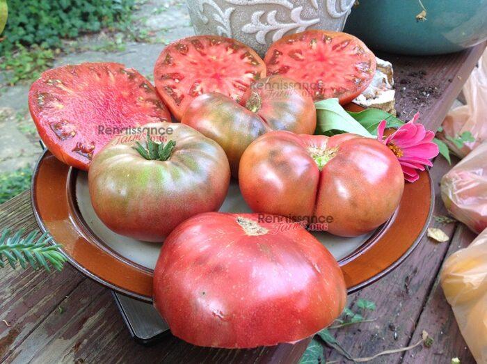Dwarf_BrandyFred_Tomato
