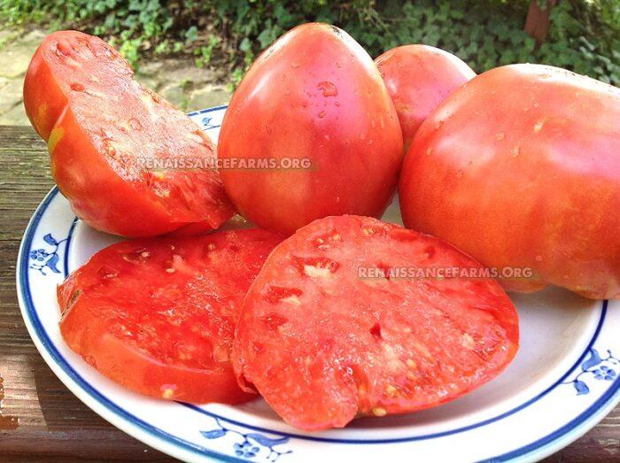 Giant Heart Climber Tomato