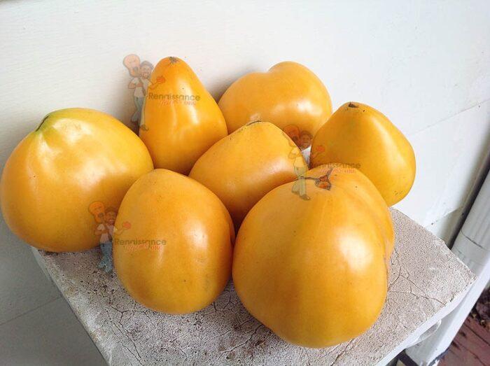 Heart Of Ashgabat Tomato 2016