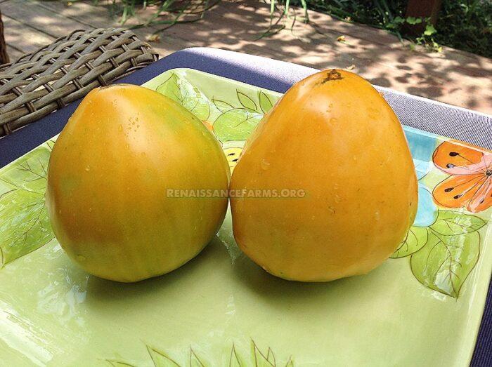 Heart Of Ashgabat Tomato