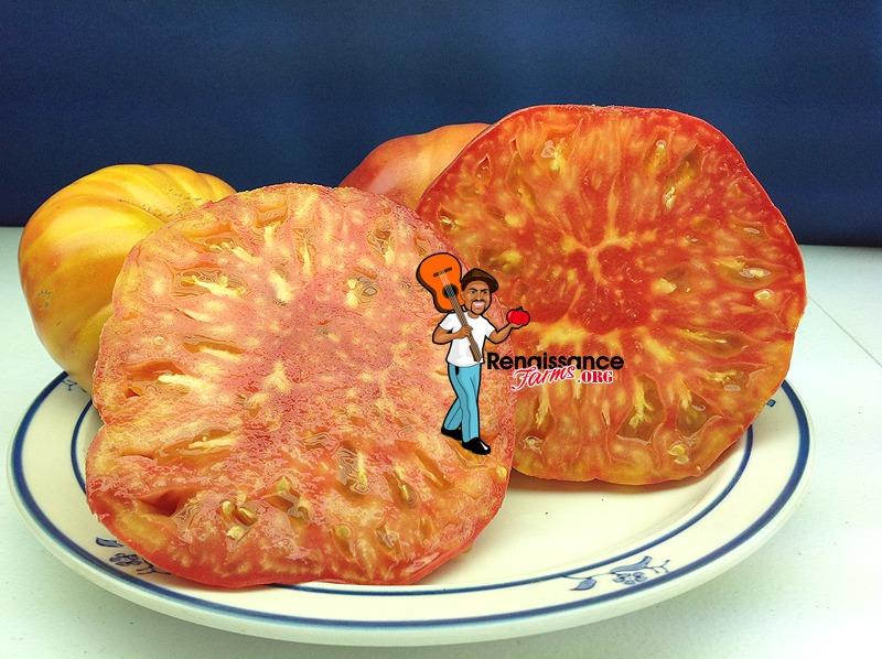 Hillbilly Potato Leaf Tomato 2019
