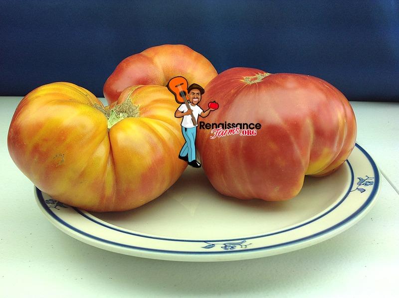 Hillbilly Potato Leaf Tomato Heirloom