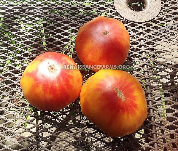 Hillbilly-Potato-Leaf-Tomato-Pictures