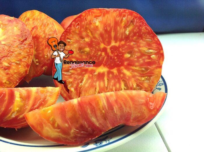Hillbilly Tomato Bi-Color