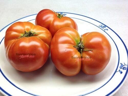 Sturt Desert Pea Tomato