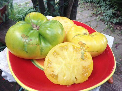 Summer Sweet Gold Dwarf Tomato